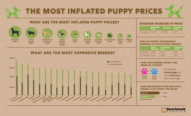 Dunfermline Press: The most inflated puppy prices. (Benchmark Kennels)