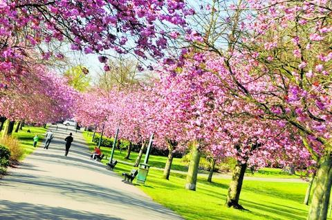 Dunfermline park is best in Scotland