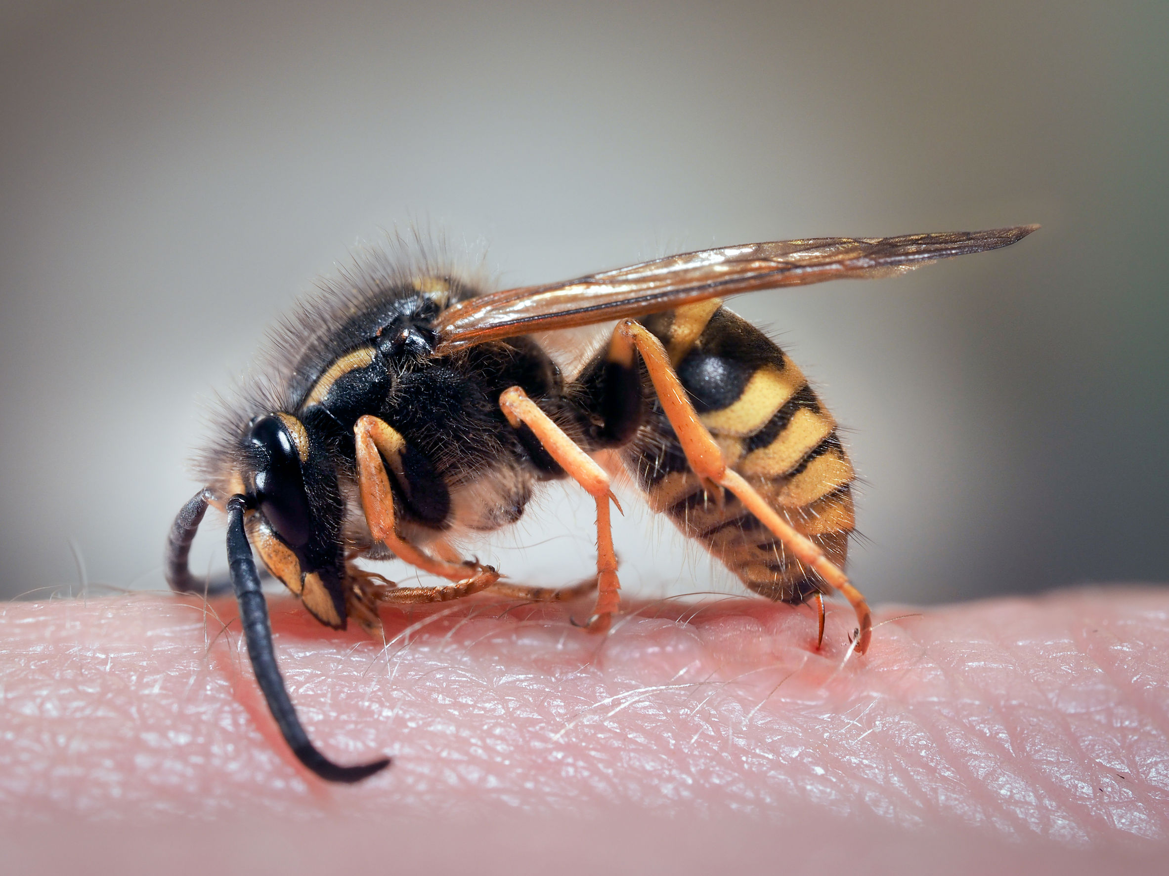 Wasp and rat call-outs rise in West Fife